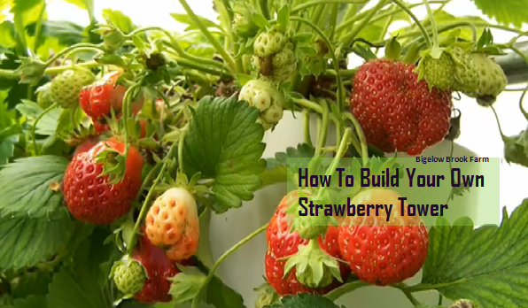 Build_Your_Own_Strawberry_Tower