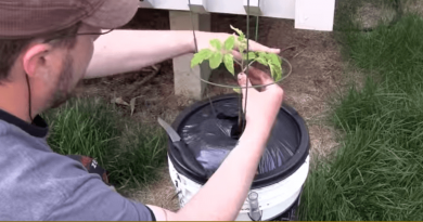 how_to_build_a_diy_self-watering_container_gardening_system