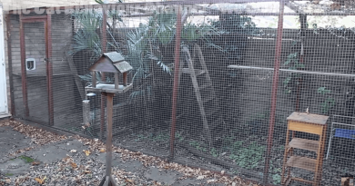 how_to_build_a_catio_with_tips