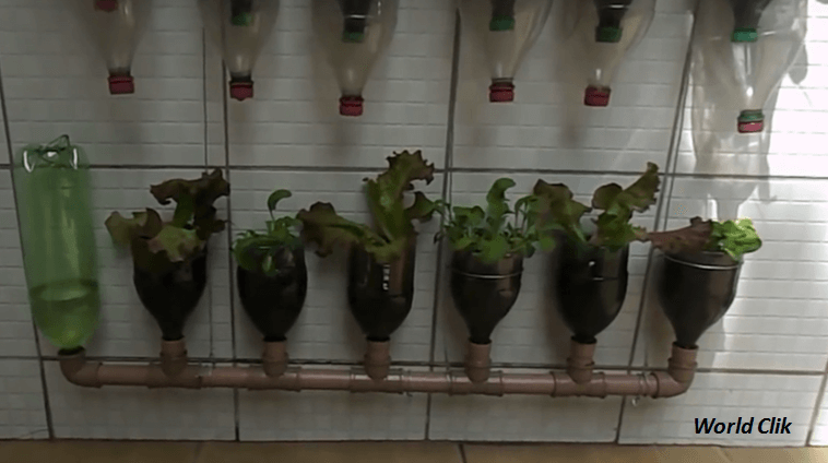 Video Awesome DIY Build A Self watering Bottle Garden