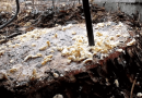 The Easiest And Cheapest Way Of Removing A Tree Stump.